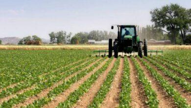 Photo of Maroc : bel exploit pour le secteur agricole, malgré le coronavirus