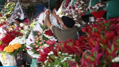 Photo of Maroc -La floriculture se flétrit en temps de crise