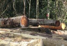 Photo of «Si nous ne faisons rien, il n'y aura plus de forêts au Cameroun dans 15 ans»