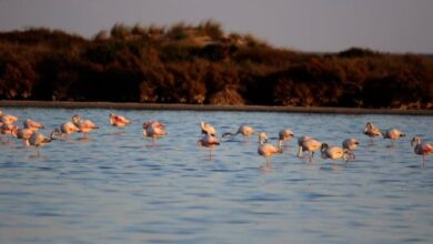 Photo of Le site de Garaet Sejnane intègre officiellement la Convention de Ramsar