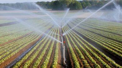 Photo of Europe : une victoire pour le Maroc dans le domaine agricole