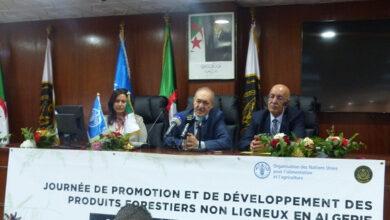 Photo de Algérie -Produits forestiers non ligneux: création de quelque 70 micro-entreprises